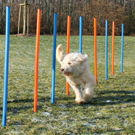 Dog Activity Slalom Agility